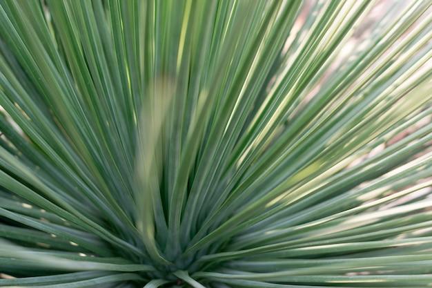 Cactus verde con foglie lunghe e strette su sfondo sfocato