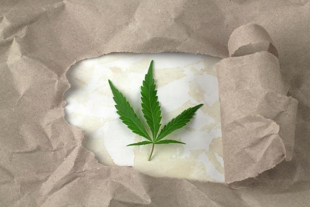 Foglia di cannabis verde su un pezzo di carta da imballaggio strappata del vecchio grunge.