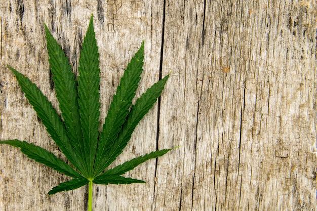 Foglia di cannabis verde su fondo in legno