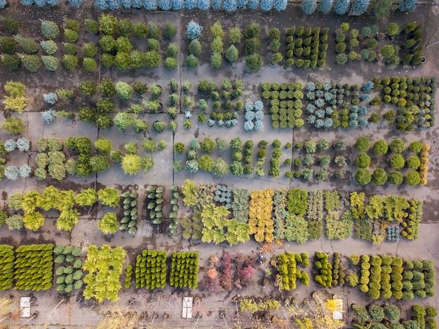 Vista di colore verde dall'alto del centro giardino con diverse piante, alberi e cespugli. vista dall'alto.