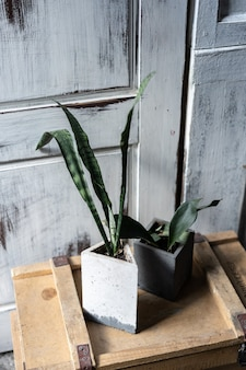 Verde in vasi di cemento sulla vecchia scatola di legno. design moderno del loft interno del soggiorno.