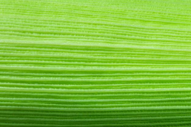 Foglia di mais verde da vicino sfondo della naturavista ravvicinata della foglia di mais