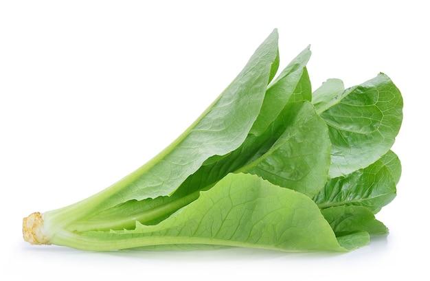Lattuga verde del cos isolata su bianco.