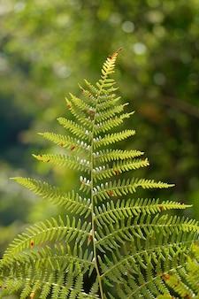 Foglia di felce verde nella natura nella stagione autunnale