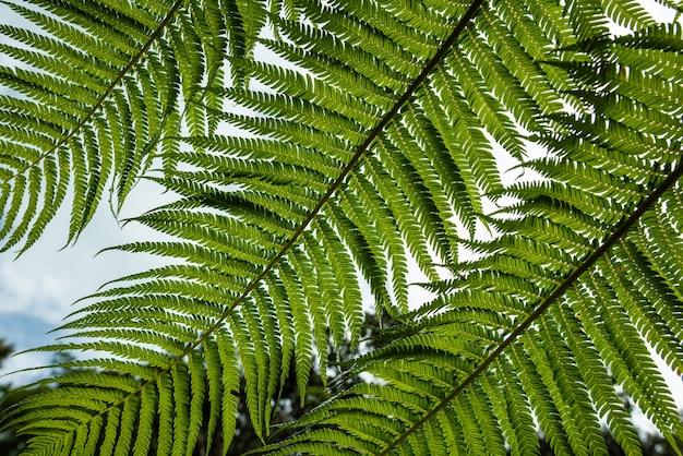 Foglie di felce verdi viste dal basso bellissimo motivo sulle loro piccole foglie iriomote island