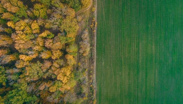 Campo verde e vista aerea della foresta di autunno