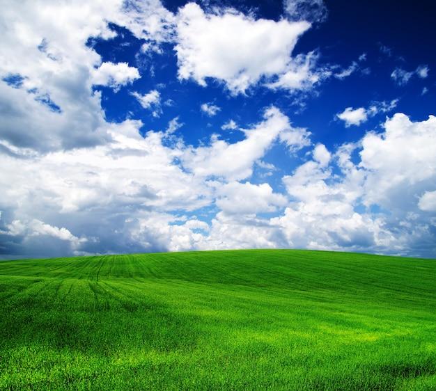 Campo verde e cielo azzurro