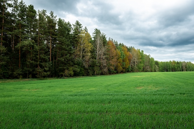 Campo verde vicino alla foresta in primavera.