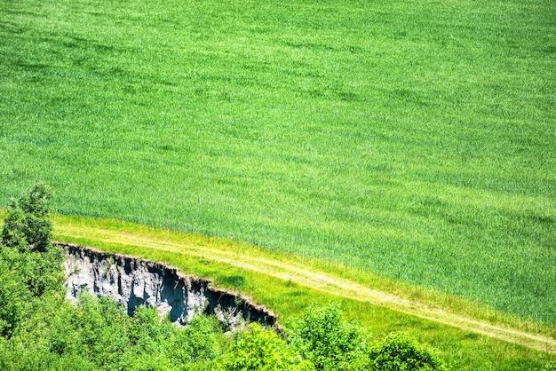 Campo verde di grano con vicino bosco e strada di campagna che passa