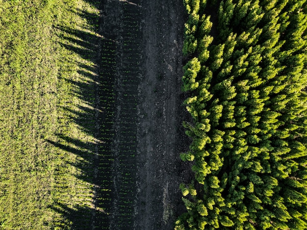 Foresta verde, il riflesso dell'ombra degli alberi sul campo