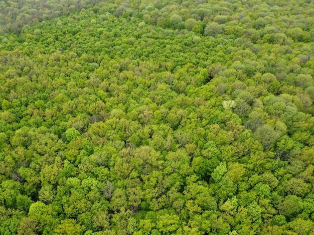 Vista dall'alto della foresta verde, vista aerea.