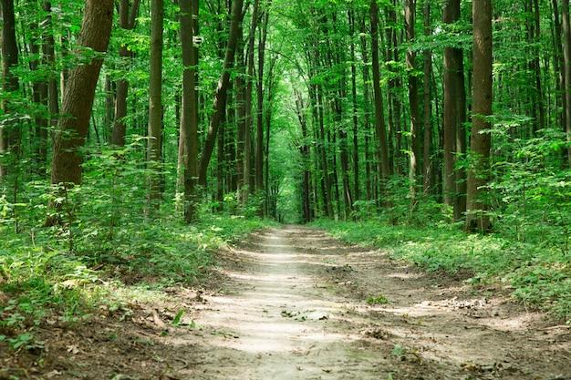 Alberi della foresta verde. sfondi di natura verde e legno del sole