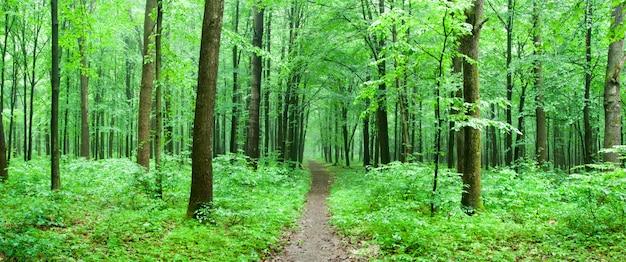 Foresta verde con un percorso
