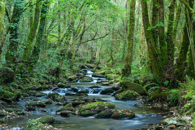 Foresta verde