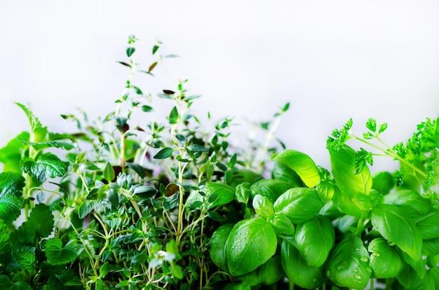 Erbe aromatiche fresche verdi - melissa, menta, timo, basilico, prezzemolo. cornice per collage da piante. Foto Premium