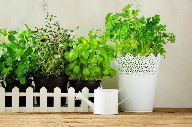 Erbe aromatiche fresche verdi - melissa, menta, timo, basilico, prezzemolo su fondo bianco. telaio di collage di banner da piante. Foto Premium