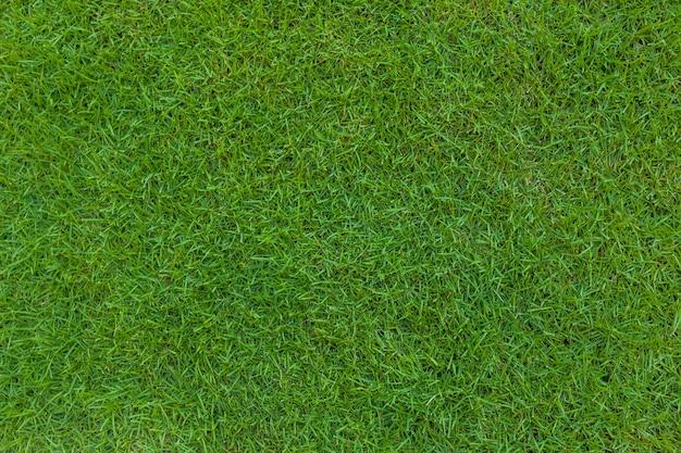 Vista dall'alto di trama di sfondo di erba verde