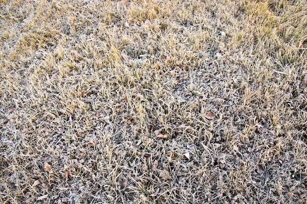 Erba verde ricoperta di neve durante il gelo Foto Premium