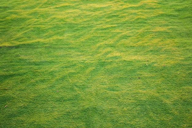 Erba verde e sfondo del campo, primo piano dell'erba per lo sfondo