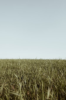 Campo di erba verde e cielo blu. minimo paesaggio naturale