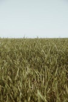 Campo di erba verde e cielo blu