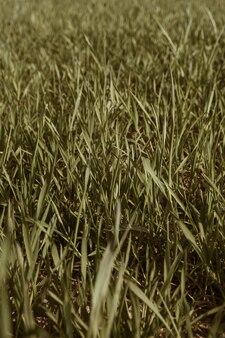 Modello di campo di erba verde. minimo naturale