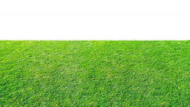 Campo di erba verde