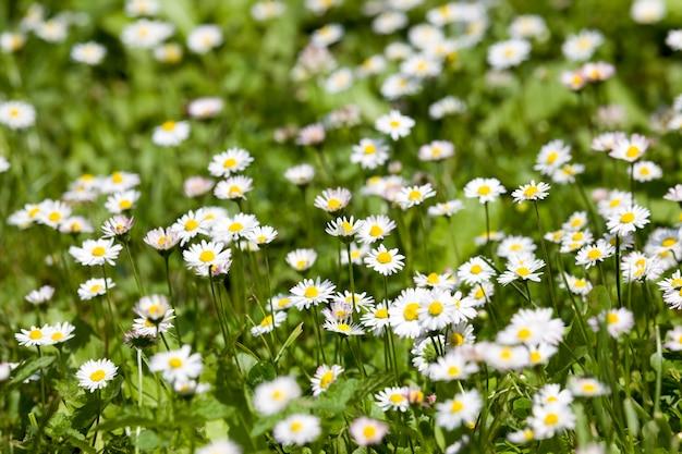 Erba verde e fiori