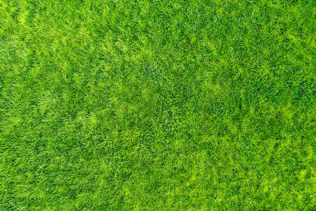 Erba verde in giardino. meraviglioso sfondo estivo.