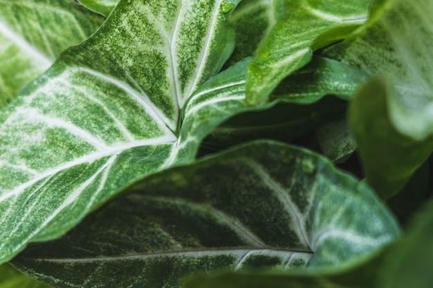Sfondo di erba verde e foglie verdi