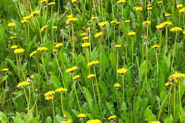 Erba verde che cresce in un campo agricolo