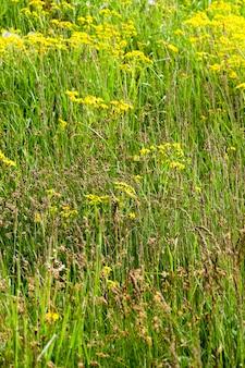 Erba verde che cresce sul territorio del campo agricolo