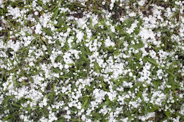 Sull'erba verde giace la grandine. piccoli banchi di ghiaccio in estate