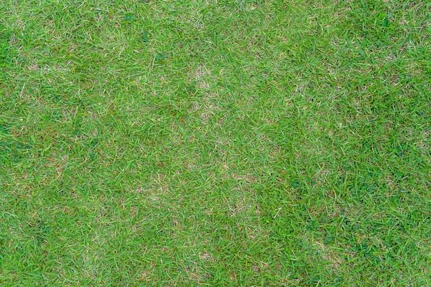 Modello e struttura dell'erba verde per lo sfondo. immagine in primo piano.