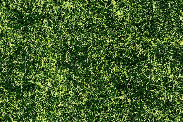 Struttura senza giunte dell'erba verde. senza cuciture nelle dimensioni orizzontali e verticali.