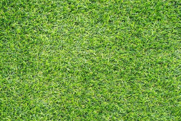 Trama di erba verde per lo sfondo. fondo del modello e della struttura del prato inglese verde. avvicinamento.
