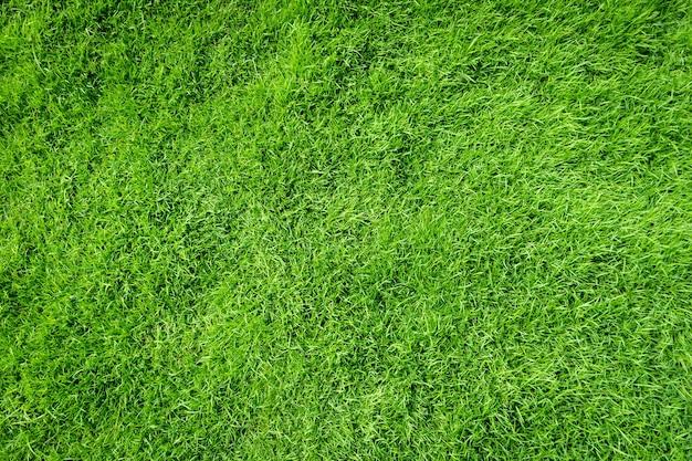 Vista superiore del fondo di struttura dell'erba verde. erba realistica.