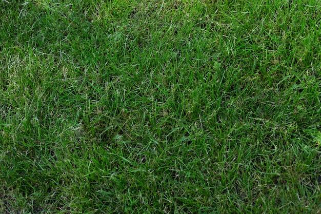 Priorità bassa della bandiera di struttura dell'erba verde