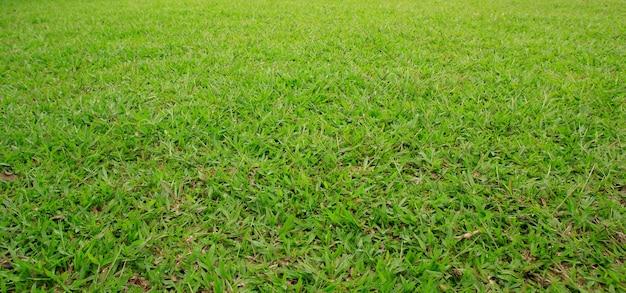 Trama di erba verde e campo in erba