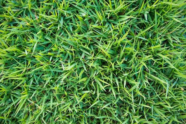 Sfondo naturale di texture erba verde