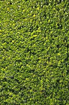 Vista dall'alto di erba verde