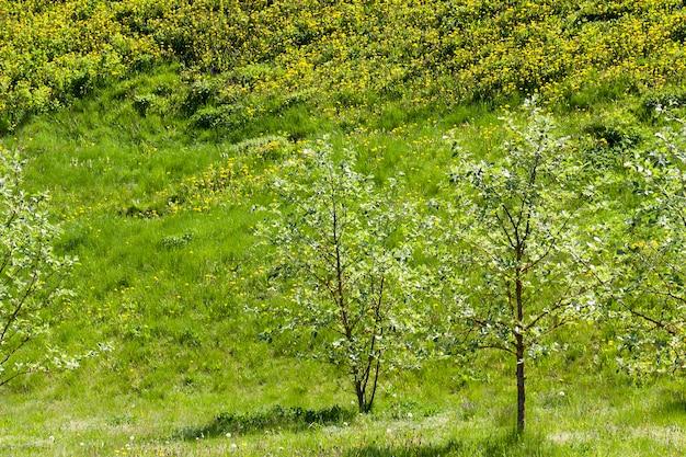 Erba verde e alberi con fogliame verde