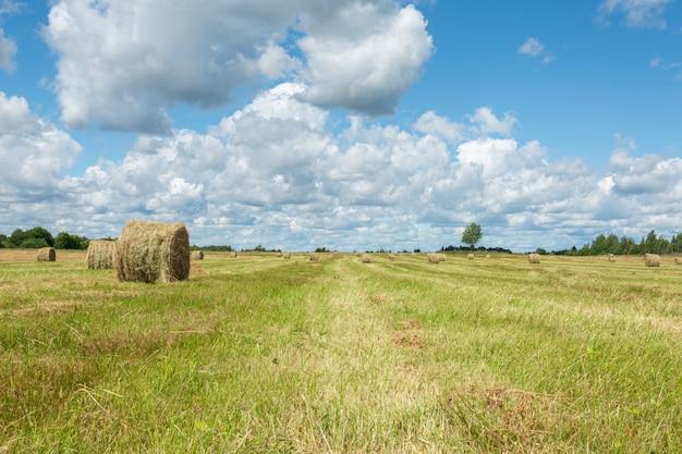 Campo erboso verde e pile di fieno in una soleggiata giornata estiva nel villaggio della russia.