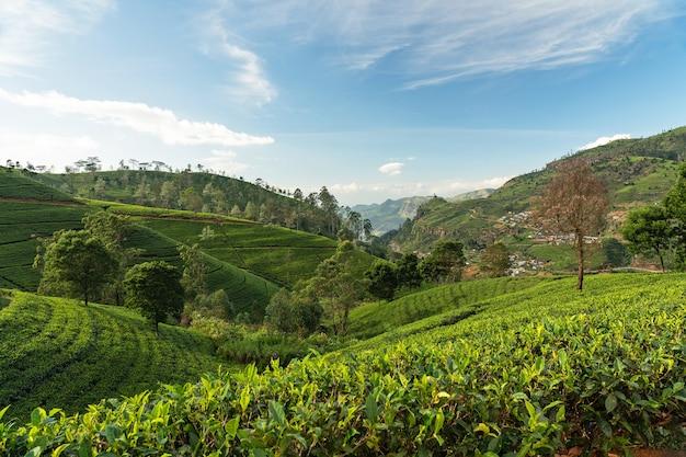 Verdi colline di campi di tè, paesaggio della regione di montagna di nuwara eliya, sri lanka.