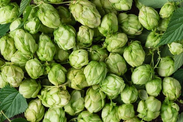 Fondo verde del luppolo concetto della fabbrica di birra della birra