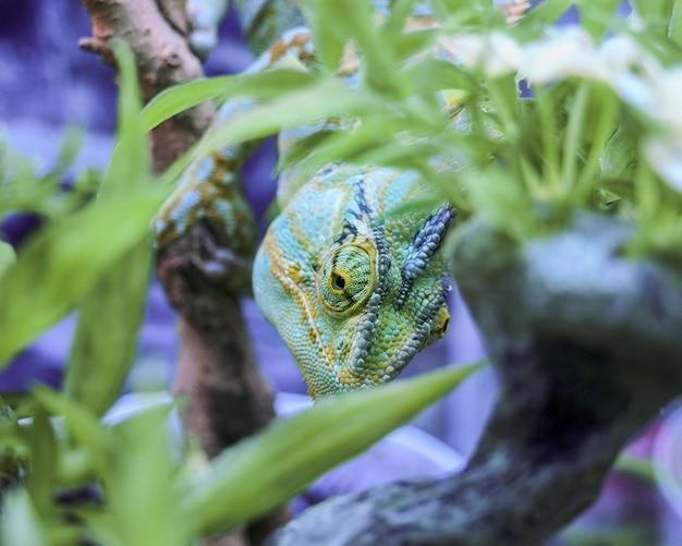 Iguana verde nell'erba