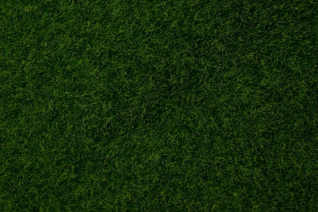 Sfondo verde prato. erba verde, vista dall'alto.