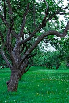 Prato inglese verde nel parco della città nell'ambito di luce soleggiata