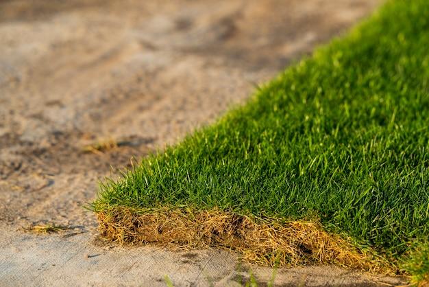 Prato verde per piantare e abbellire prati, tappeto erboso nel centro del giardino