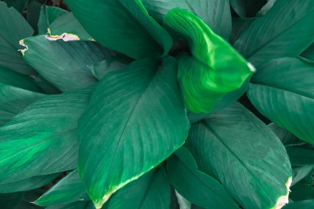 Sfondo foglia verde e sfondo foglia verde